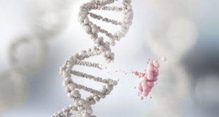 La genética podría incidir en el desarrollo de psoriasis