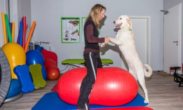 Cómo ayudan las terapias asistidas con animales para la fibromialgia